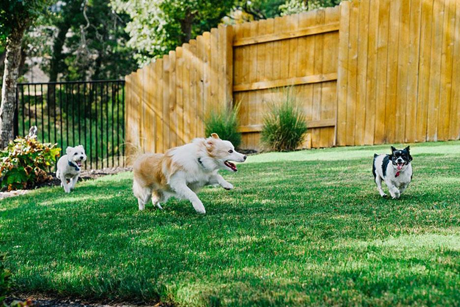 Dog Play Park
